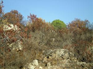 יער ירוק הופך לחום-שרוף