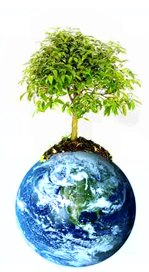 עץ וכדור הארץ