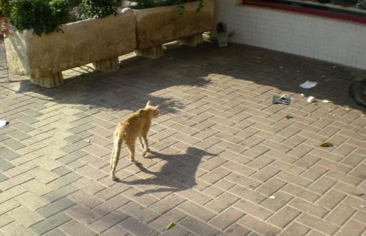 חתול רחוב מחפש מזון A street cat searching for food