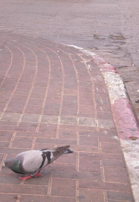 ציפור תרה אחר מזון A bird is looking for food