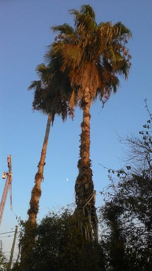 #developingyoureye זוג דקלים ירח ועגורן A couple of palm tree, a moon and a crane