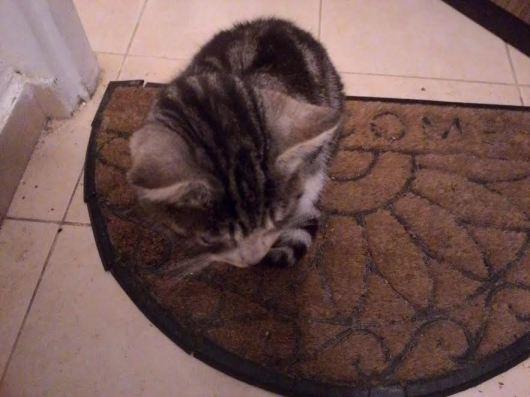 החתולה אחרי שנתקלתי בה Ze cat after my feet met her