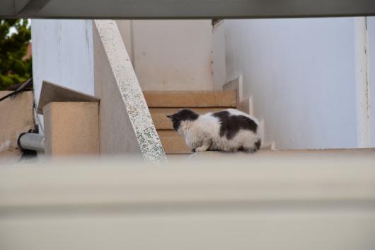 חתולה על גדר A cat on a fence