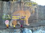 חתלתול או גור אריות Kitten or lion cub