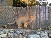 גור חתולים 30.5.17ה