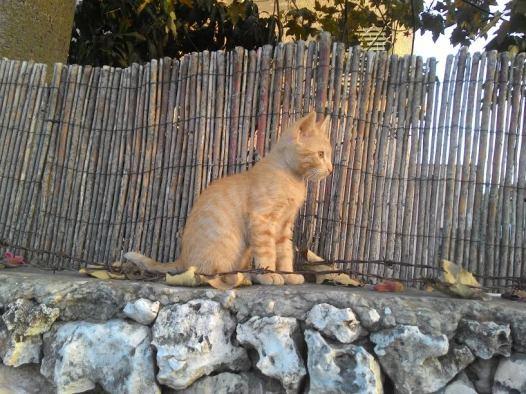 גור חתולים 30.5.17ו