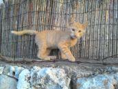 גור חתולים 30.5.17ז
