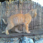גור חתולים 30.5.17י