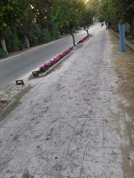 פרחים, יופי, אדניות, מדרכה מטונפת Flowers, beauty, planter, filthy pavement