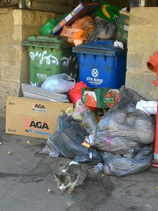 חתול מחטט בזבל ללא השגחת הרבנות Cat rummaging through the garbage without rabbis' supervision