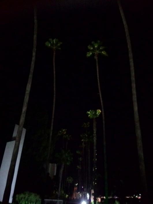לילה בגן המייסדים בחדרה, שבע בערב Night at Gan Hameyasdim in Hadera, 7 o'clock