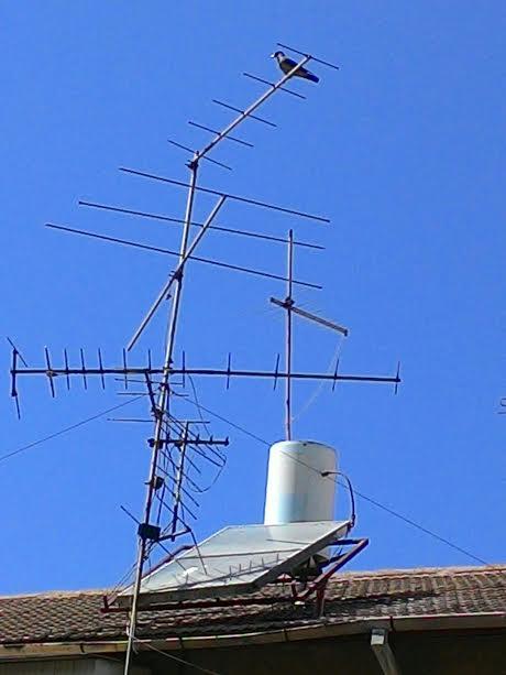 עורב נח על אנטנה ברחוב שלי A crow rests on an antenna in my street