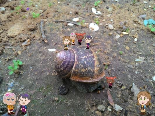 שבלול מטייל בחצר A snail strolling in the yard