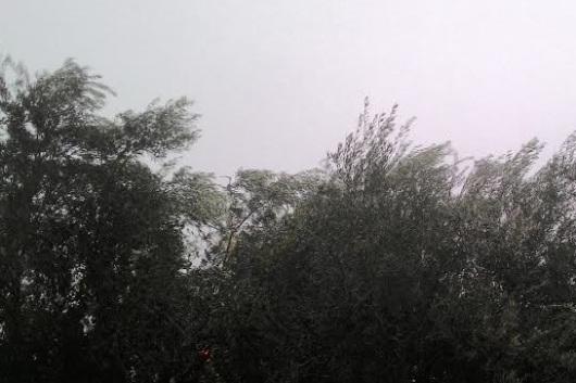 גשם ורוח Rain and wind