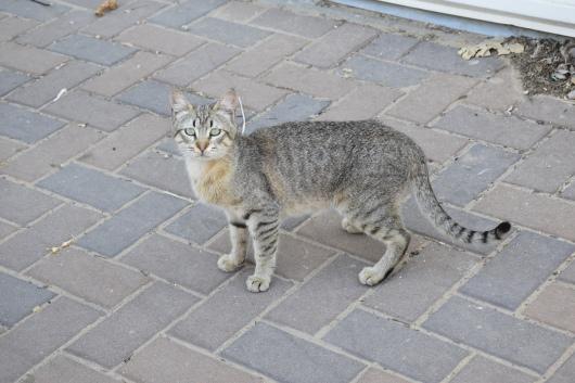 חתולה תוהה ברחוב הריק A cat wonders in the empty street