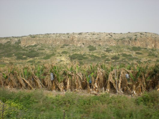 שדה וטרשים Field and rocky landscape