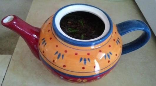 חליטת תה ירוק ונענע בקומקומון Green tea and mint infusion in the teapot