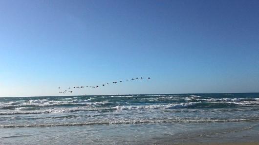 ציפורים מעל הים Birds over the sea