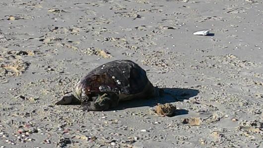 יצור מת בחוף הים Dead creature on the beach