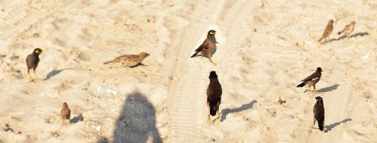 ציפורים בחוף Birds on the beach
