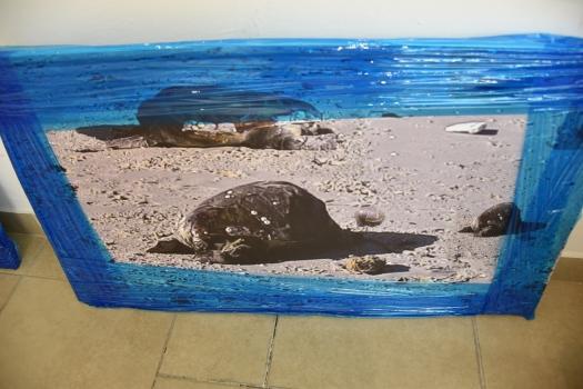 פוטומונטז', צבים מתים בחוף הים Photomontage, dead turtles on the beach