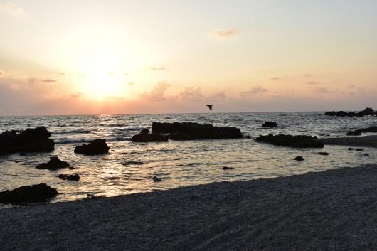 ציפור דואה באופק בשקיעה A bird flies on the horizon at sunset