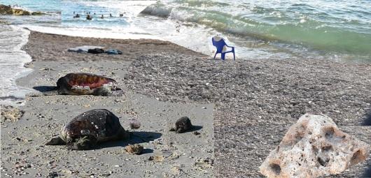 יצורים בחוף הים, פוטומונטז' ,Creatures at the beach Photomontage