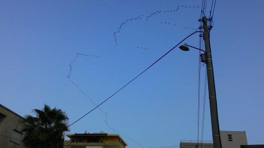 להקת ציפורים נודדותנוספת Another flock of migratory birds