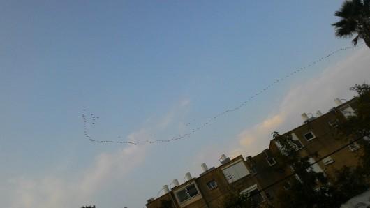 עוד להקת ציפורים נודדות Another flock of migratory birds
