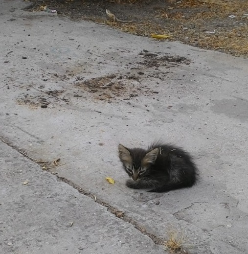 חתלתול בחצר   A kitten in the yard