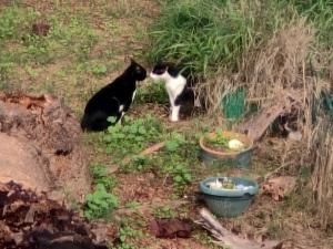 חתולים רבים   Cats are having a quarrel