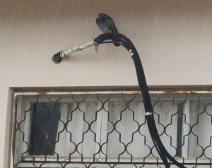 ציפור בגשם מכנסת את כנפיה   A bird in the rain gathers its wings