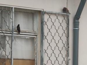 ציפורים מוצאות מחסה מפני הגשם   Birds find shelter from the rain