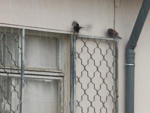 ציפורים מצטופפות יחד   Birds huddle together